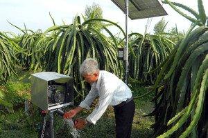 Tưới nhỏ giọt cho Thanh Long bằng bơm năng lượng mặt trời